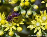 Bees + Yellow Flowers HB 7.jpg
