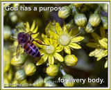 Bees + Yellow Flowers HB 8 TEXT.jpg