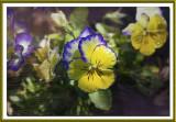 Flowers HB Yard 4-28-15 (23) TX F.jpg