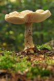 DSC_5469 (Lonnekermeer)