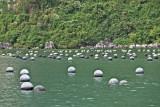 Pearl farm in Ha Long Bay, Vietnam