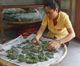 Sorting silkworms in preparation for obtaining silk for finished products - Thang Loi Company, Hoi An, Vietnam