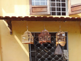 Pet canaries hanging in cages outside the home  seen in the previous photo - Old Town, Hoi An, Vietnam