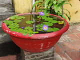 Small water garden outside a home - Old Town, Hoi An, Vietnam