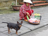 A woman cooking food on the street - and her dog - Old Town, Hoi An, Vietnam