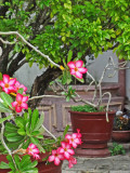 Flowers in the courtyard of the Chinese Meeting Hall, Hoi An, Vietnam