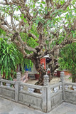 Trees in the courtyard of the Chinese Meeting Hall - Hoi An, Vietnam