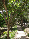 We rode our bikes on this narrow concrete trail - surrounding areas are beautiful - island near My Tho, Vietnam