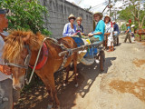 Sally, Janet, Stacy and Judy - ready for a donkey cart ride on an island near My Tho, Mekong Delta, Vietnam