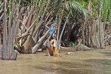 A young man washing in the river - seen while we were in a sampan exploring canals  - island near My Tho, Mekong Delta, Vietnam