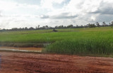 Dirt road surrounded by rice fields - approaching the small, rural village where our sponsored high school young ladies live