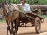 A farmer in his horse cart on the Spean Praptos Bridge - connecting Angkor to Phnom Chisor, Cambodia