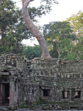 Ta Prohm Temple - in Angkor, Siem Reap Province, Cambodia