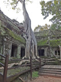 Ta Prohm Temple - eerily beautiful and other worldly - nature was conquered to create it - nature now is reclaiming it
