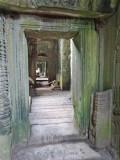 Ta Prohm Temple - interior halls - in Angkor, Siem Reap Province, Cambodia