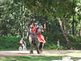 Tourists can pay for an elephant ride - Angkor Thom, Cambodia