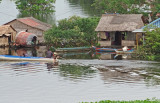 Houses in a floating village in the flooded forest/wetlands next to Tonle Sap Lake - Siem Reap Province, Cambodia