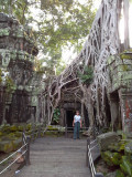 Judy at the Ta Prohm Temple - in Angkor, Siem Reap Province, Cambodia