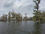 Lake Martin in southwestern Louisiana as seen from our boat. We took a private, guided boat tour of the Lake.