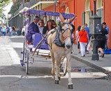A buggy ride - part of a wedding celebration in the French Quarter of New Orleans