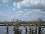 Swamp seen while driving west out of New Orleans