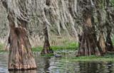 Heron on Lake Martin in southwestern Louisiana