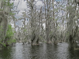 Lake Martin in southwestern Louisiana - as seen from our boat