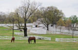Horses and stable at Graceland - Elvis Presley's home in Memphis, Tennessee