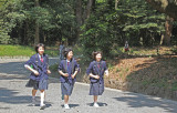 Schoolgirls approaching the Meiji Shinto Shrine inner complex on the gravel road entrance surrounded by cedars.- Tokyo