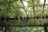 Plants hanging overhead in the East garden of the Imperial Palace - Tokyo