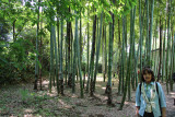 Judy next to a Moso Bamboo Grove in the East Garden of the Imperial Palace - Tokyo