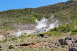Sulfurous steam vents at Owakudani