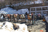 Judy petting horses used to explore Mt. Fuji - at the Fuji Subaru Line 5th Station - more than halfway up the side of Mt. Fuji