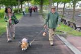 Man walking his dog Kiko with a wheeled cart to support the dog's rear - near Lake Suwa in Suwa-shi
