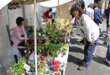 Judy examining plants at the Morning Market next to the Miyagawa River in Takayama
