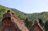 Workers repairing the thatched roof of a Gassho style house in the Gassho-zukuri Village in Shirakawa-go