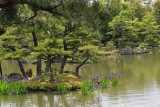 An islet in the Kyokochi Pond at the Golden Pavilion in Kyoto. A bird is on a small fallen branch in the pond in the background.