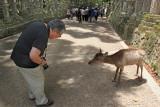 John and a deer  in Nara Park in Nara, Mutually respectful bows? :-)