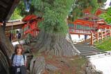 Judy next to a thousand year old Japanese cedar (Honsha-osugi) at Kasuga Taisha (a Shinto shrine) in Nara Park in Nara
