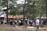 Schoolchildren and deer in Nara Park in Nara