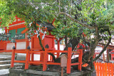 Legend has it that the wind brought the seeds of seven different trees to form this one - at Kasuga Taisha in Nara Park in Nara
