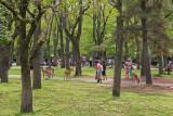 Deer in Nara Park - seen while walking from Kasuga Taisha (a Shinto shrine) to Todaiji (a Buddhist temple) in Nara Park in Nara
