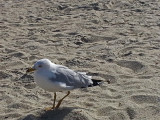 A seagull - East Coast of Tybee Island