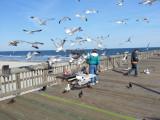 A woman feeding seagulls on the fishing pier - East Coast of Tybee Island