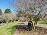 Judy near a line of crepe myrtle trees at the Coastal Georgia Botanical Gardens - Savannah