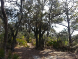 Trail to a sea water marsh - part of our private, guided tour of the marsh - Tybee Island
