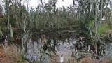 Home of alligators at the Savannah National Wildlife Refuge