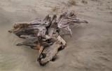 Driftwood on the beach - East Coast of Tybee Island