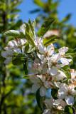 Morning Glory Orchard
