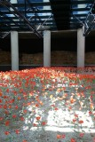 No Man's Land and Poppies